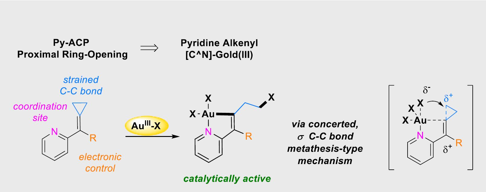 [C^N]‐Alkenyl Gold(III) Complexes by Proximal Ring‐Opening of (2‐Pyridyl)alkylidenecyclopropanes: Mechanistic Insights