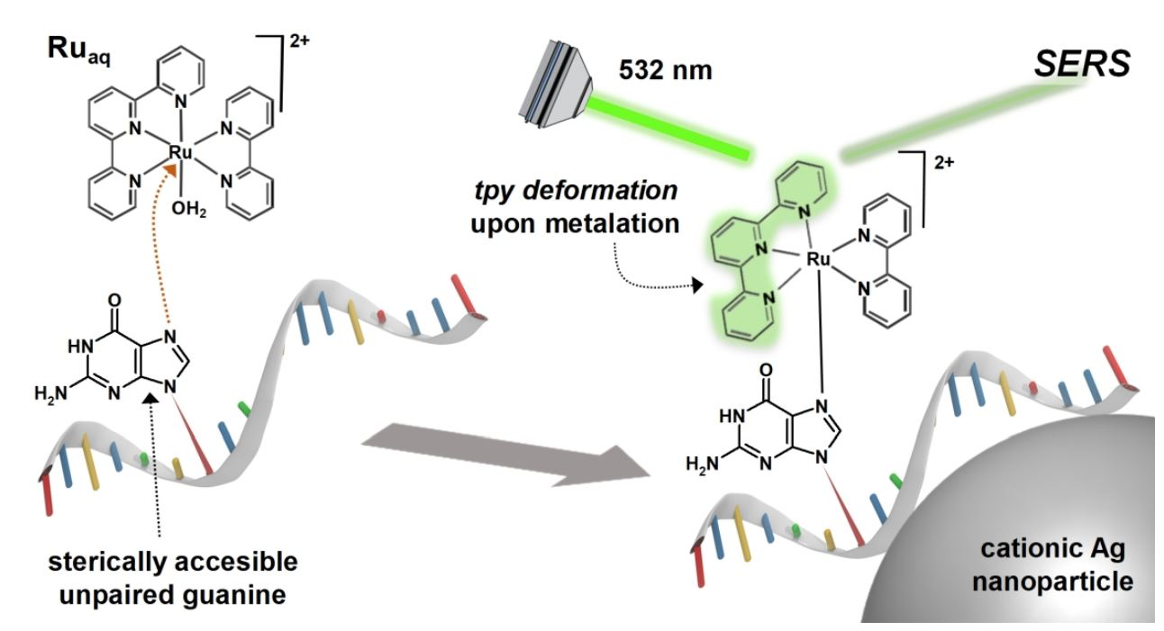 Surface-enhanced Raman Scattering Detection of Nucleic Acids exhibiting Sterically Accessible Guanines using Ruthenium-polypyridyl Reagents